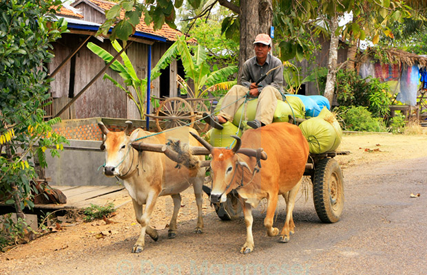 Ox-Cart Riding Tour Through Villages in Countryside