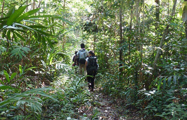 Cardamom Mountains and trekking