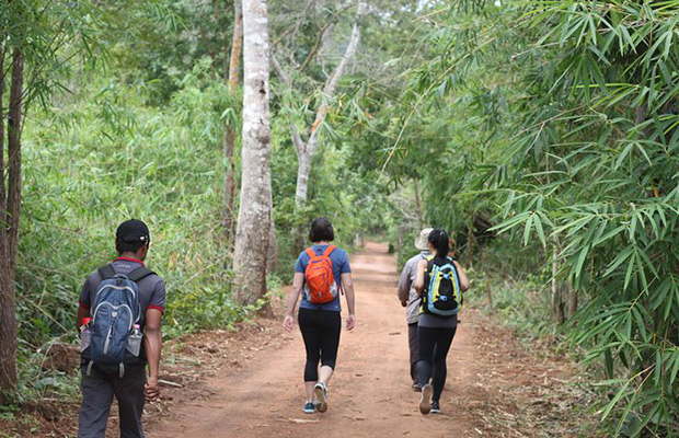 Trekking Day Tour at Kirirom National Park to Cardamom Mountain